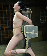 Roped, nose hooked, tit clamped, dildoed, vibed